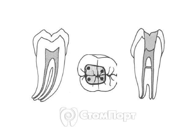 Морфология зубов нижней челюсти